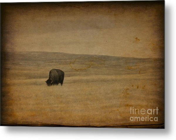 Western Themed South Dakota Bison  Metal Print