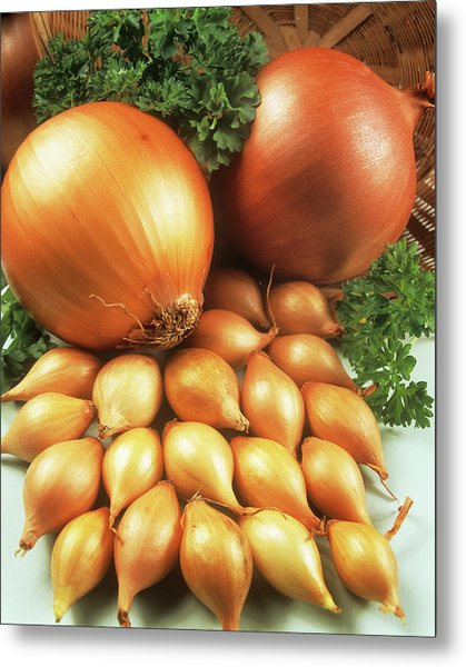 Onions Metal Print by Ray Lacey/science Photo Library