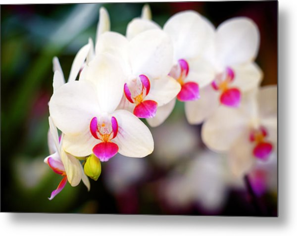Orchid Beauty Metal Print by Tammy Smith
