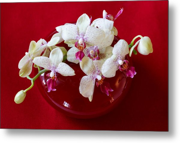 Metal Print featuring the photograph Orchid Center Piece by Paul Indigo