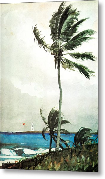 Palm Tree Nassau Metal Print