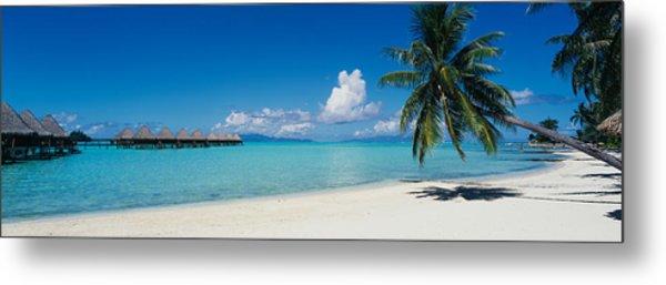 Palm Tree On The Beach, Moana Beach Metal Print