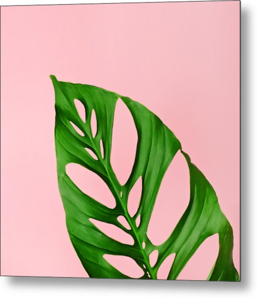 Philodendron Leaf On Pink Metal Print