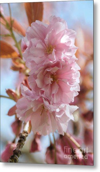 Pink Cherry Blossoms Metal Print