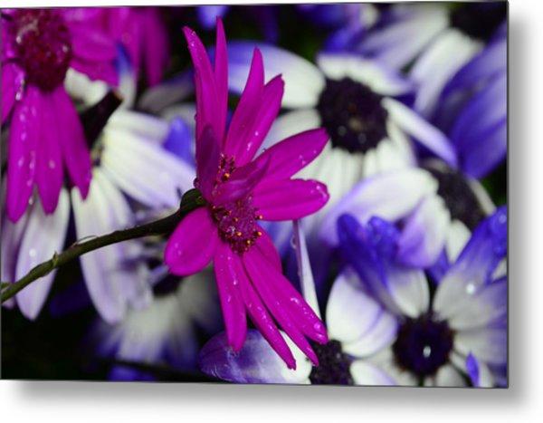 Pink Flower Metal Print by Barbara Walsh
