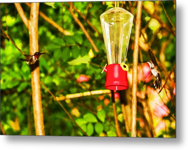 Hummingbirds - In Flight - Pit Stop Metal Print by Barry Jones