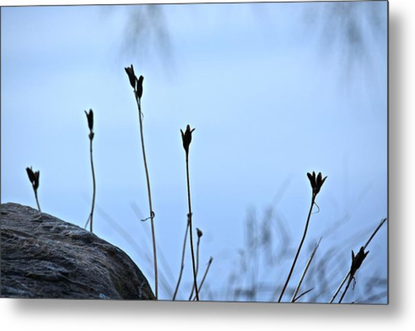 Pods On Pond Metal Print