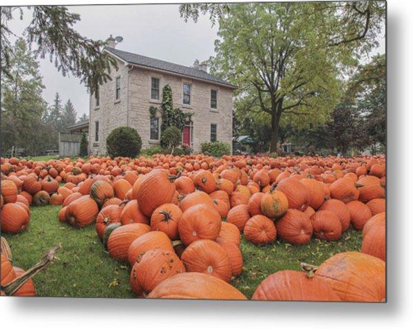 Pumpkin Farm  Metal Print