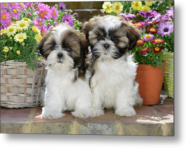 Puppies And Flower Pots Metal Print
