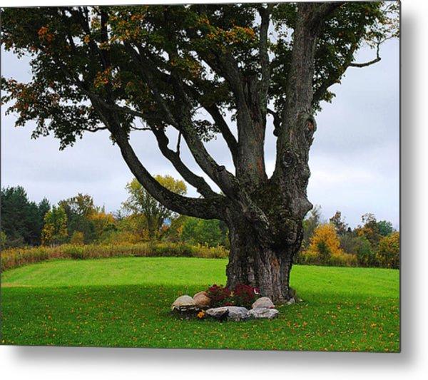 Quiet Tree Metal Print by Stephanie Grooms