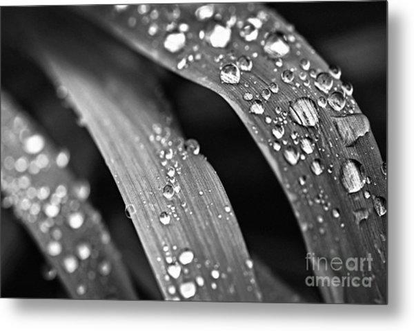 Raindrops On Grass Blades Metal Print