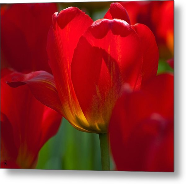 Red Metal Print by Randolph Fritz
