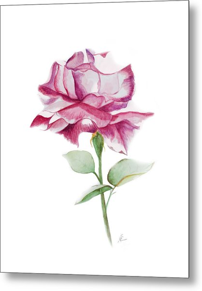 Rose 2 Metal Print by Nancy Edwards