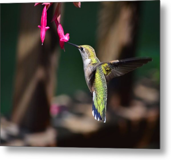 Ruby Throat Hummingbird Metal Print