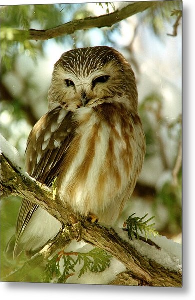 Sawhet Owl Metal Print