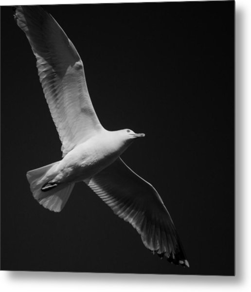 Seagull Underglow - Black And White Metal Print