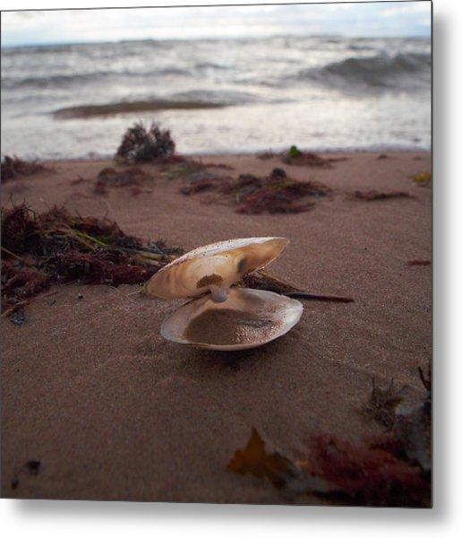 Shells On The Beach Where Is Venus Metal Print
