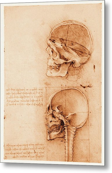 Skull Anatomy Metal Print by Mehau Kulyk