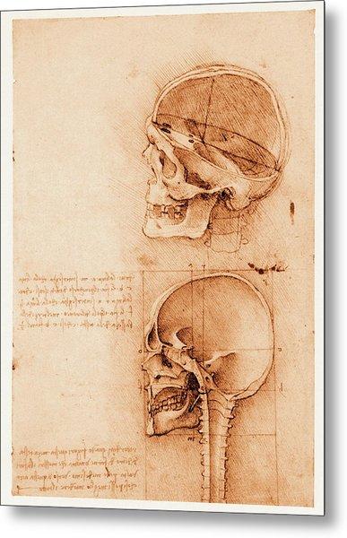 Skull Anatomy Metal Print