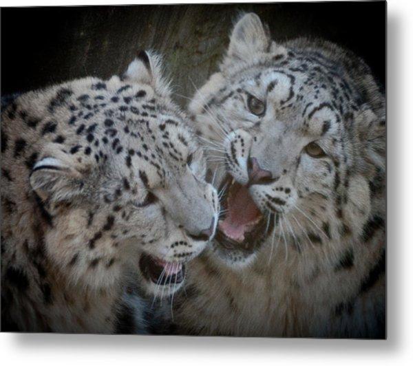Snow Leopard Cubs Metal Print