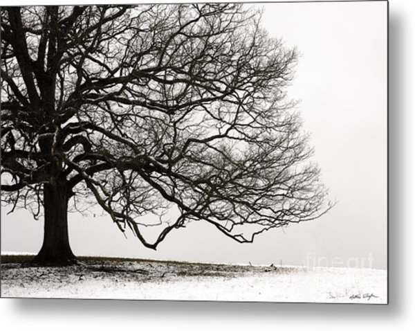 Snow Tree 2010 Metal Print