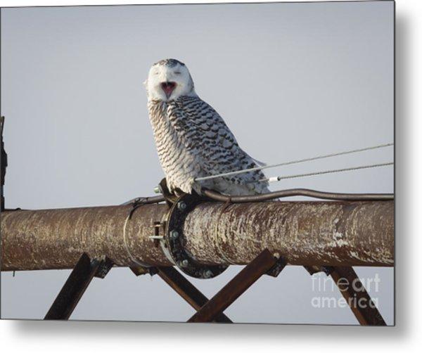 Snowy Owl In Kenosha Metal Print by Ricky L Jones