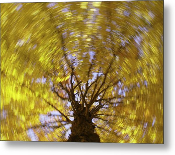 Spinning Maple Metal Print