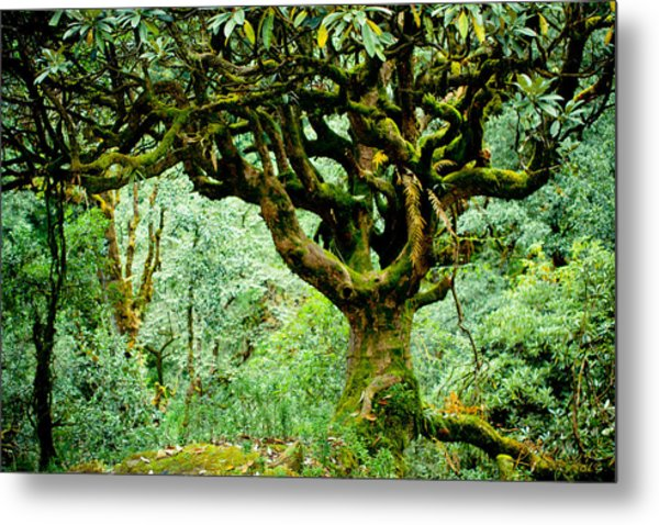 Spirit Of Forest Metal Print