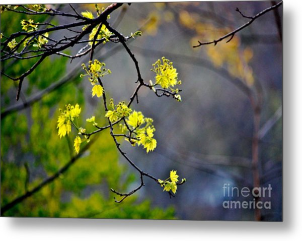 Spring Leaves Metal Print by Jay Nodianos