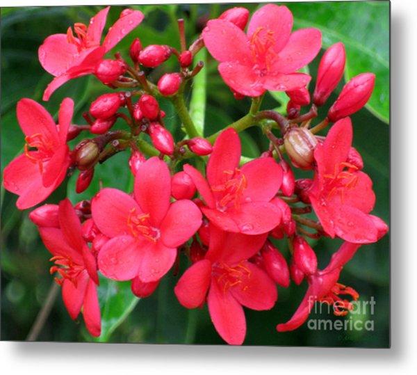 Lovely Spring Flowers Metal Print