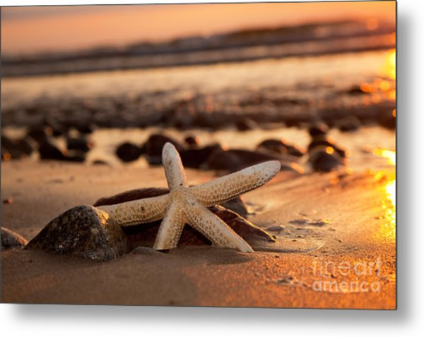 Starfish On The Beach At Sunset Metal Print