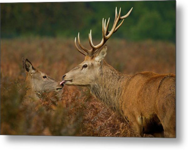 Stolen Kiss Metal Print by Val Saxby