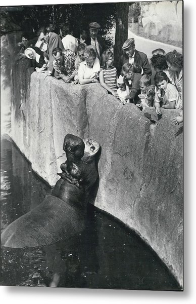 Summer Snaps At The Zoo Metal Print by Retro Images Archive