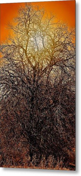 Sunburst Tree  Metal Print