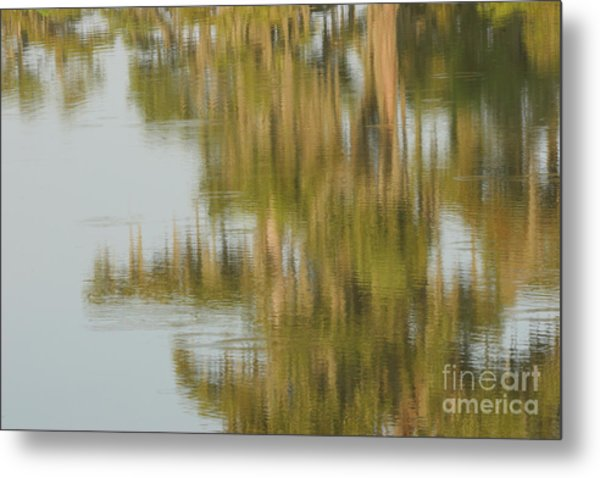 Swamp Reflections Metal Print by Kelly Morvant