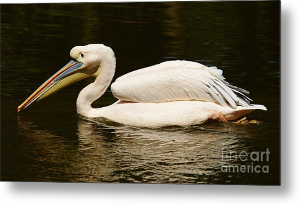 Swimming Pink Pelican Metal Print