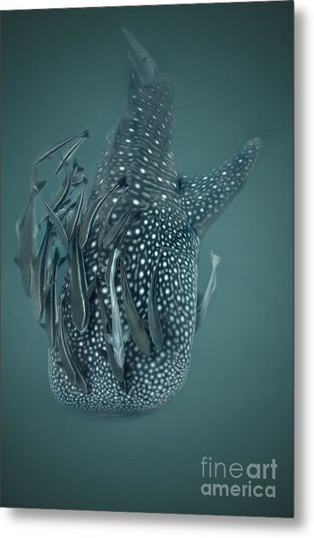 The Gentle Giant Metal Print by Soren Egeberg