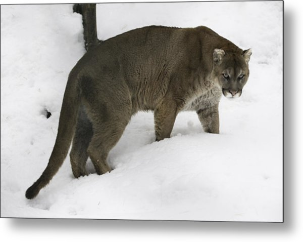 The Look Metal Print by David Barker