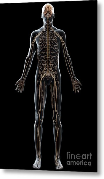 The Nerves Of The Body Metal Print