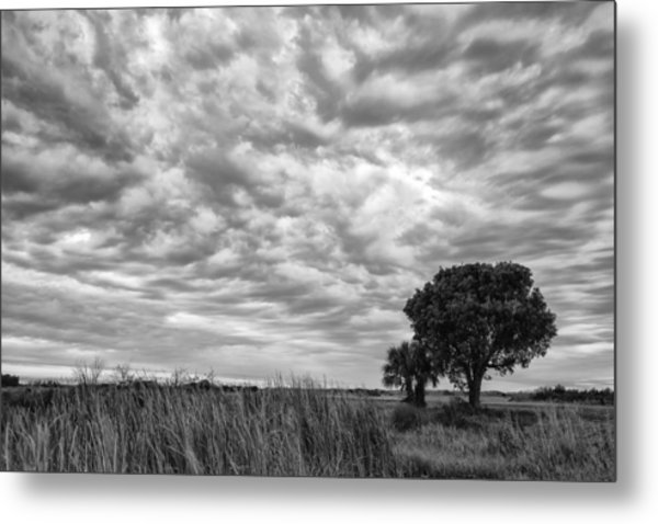 The Right Tree Metal Print