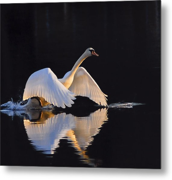 The Swan Of Zoar Metal Print