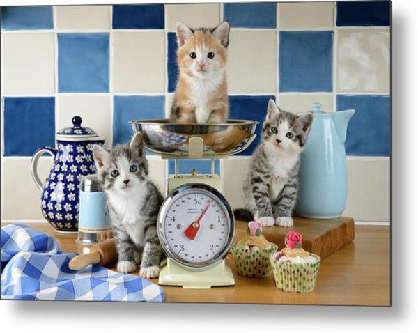 Three Baking Kittens Metal Print