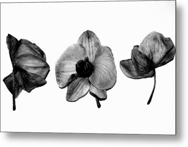 Three Beauties Metal Print