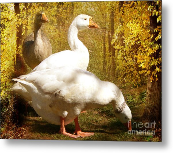 Three Geese A Grazing Metal Print