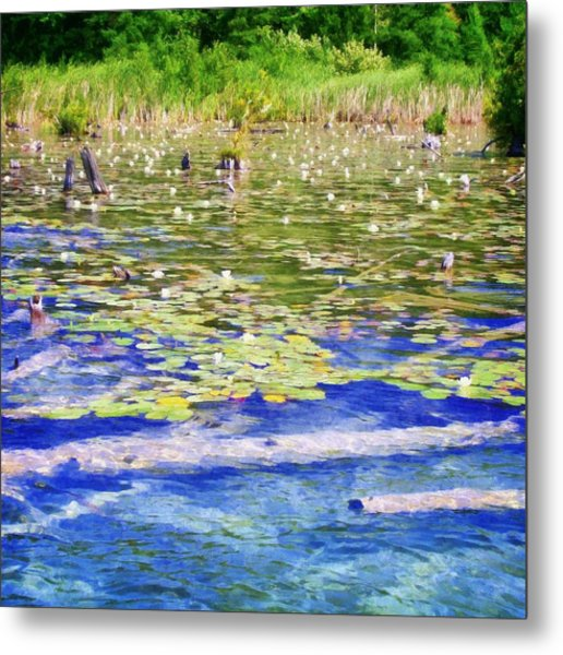 Torch River Water Lilies Metal Print