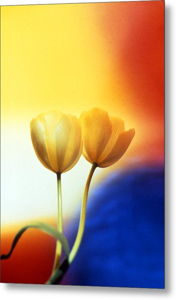 Tulips  Metal Print by Etti PALITZ