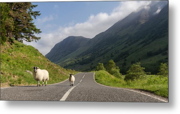 Two Sheeps Walking Along A Road In The Scottish Highlands Metal Print by Leander Nardin