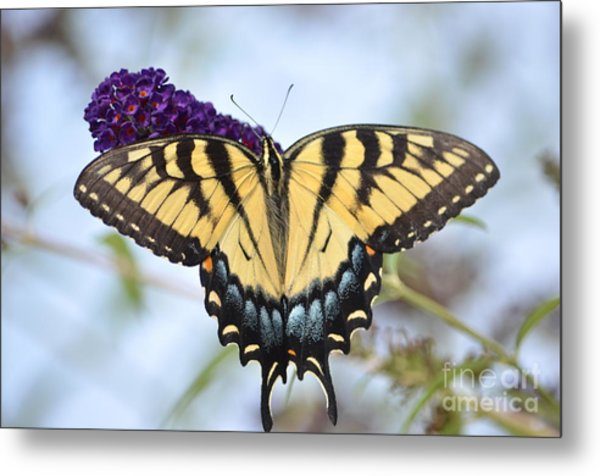 Two  Tailed Swallowtail Metal Print by Kathy Gibbons