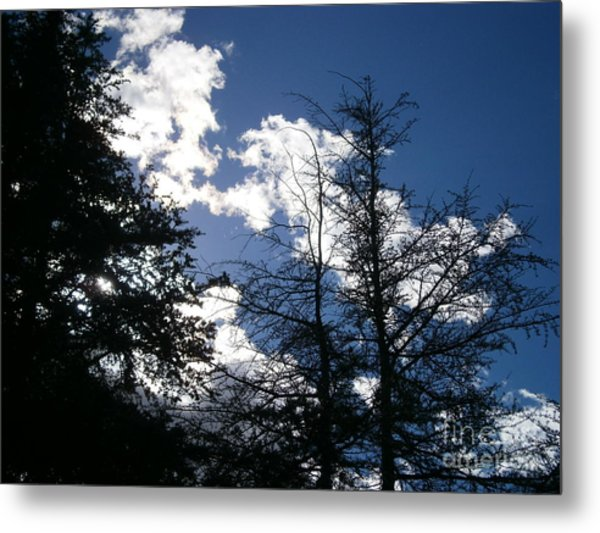 Untitled Photo 8 Metal Print by Drew Shourd