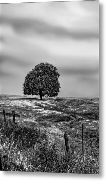 Valley Oak Majesty Metal Print